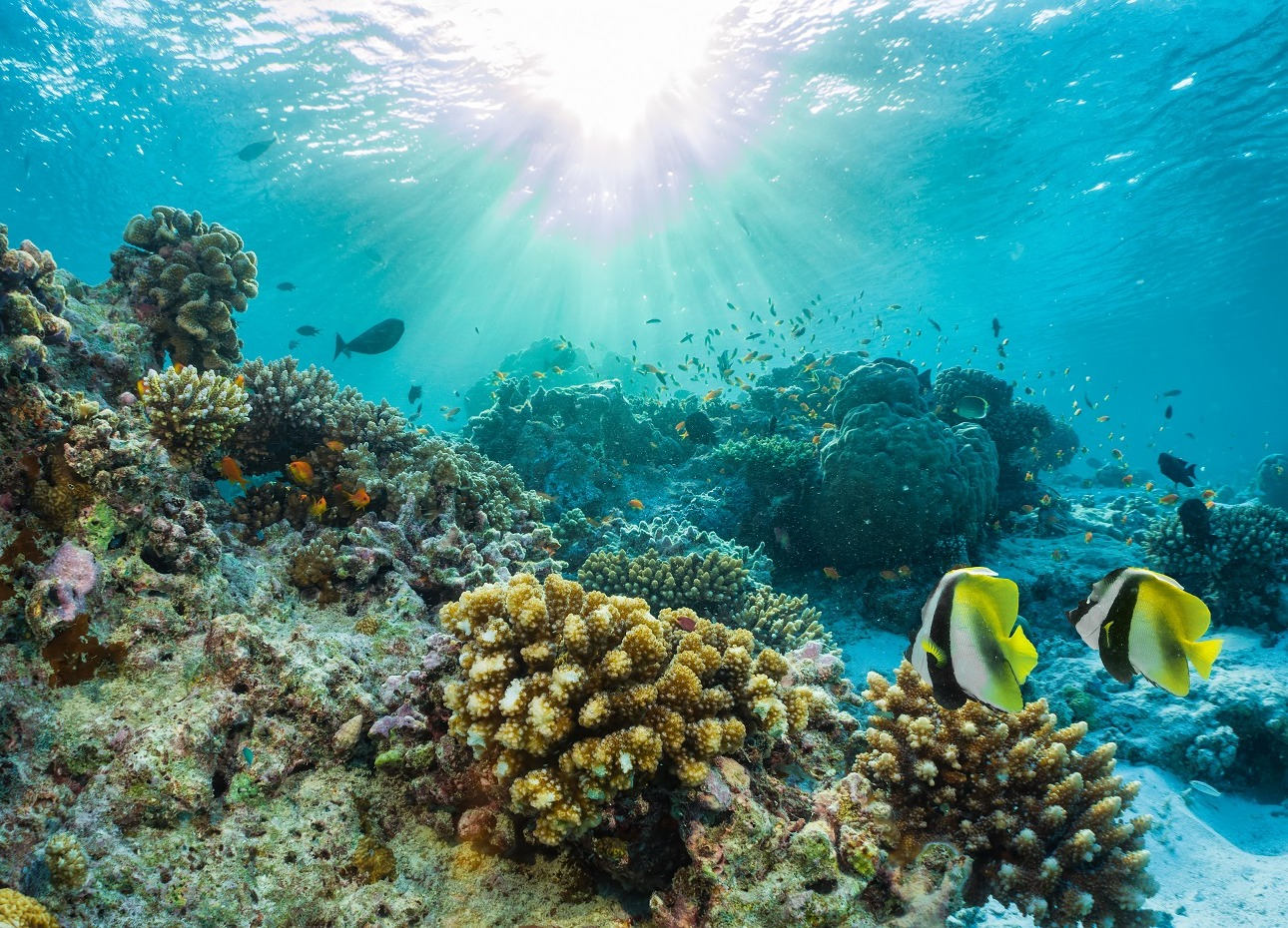 Exploring the reefs of the Indian Ocean, Maldives