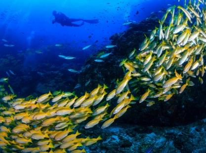 School of fish in the reefs of fish head, north ari, maldives