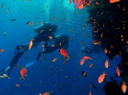 A pair of scuba divers inspecting the reef at Zabargad Island, Red Sea, Egypt