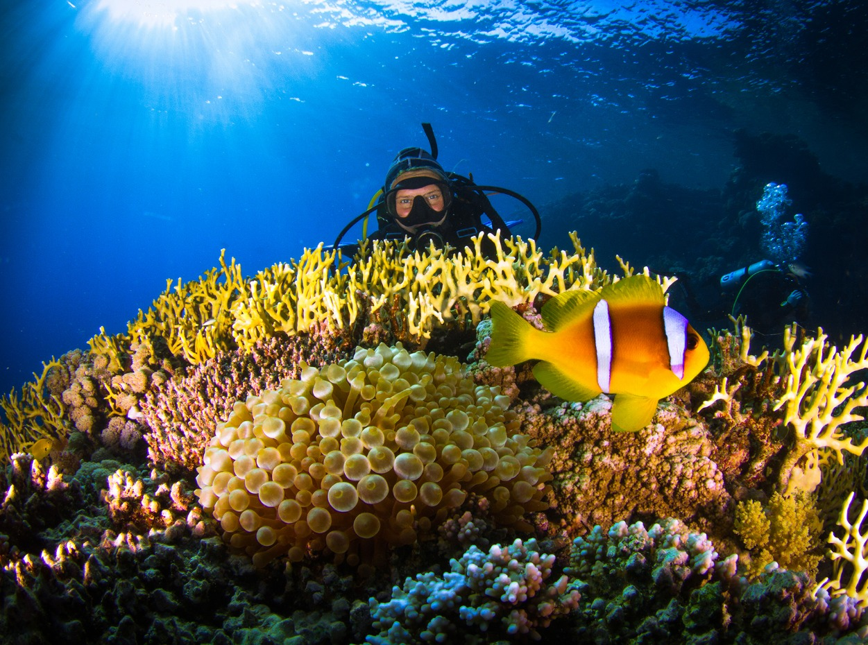 Diver peers over colourful, hard coral garden in the Red Sea