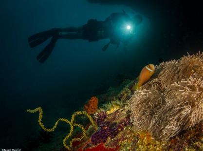 Dive exploring the Maldives corals