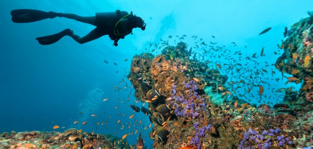 Diver exploring the brightly coloured reefs of the Indian Ocean, Maldives