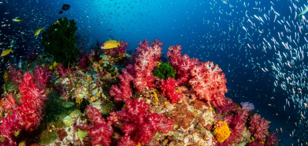 Brightly coloured reefs, Indian Ocean, Maldives