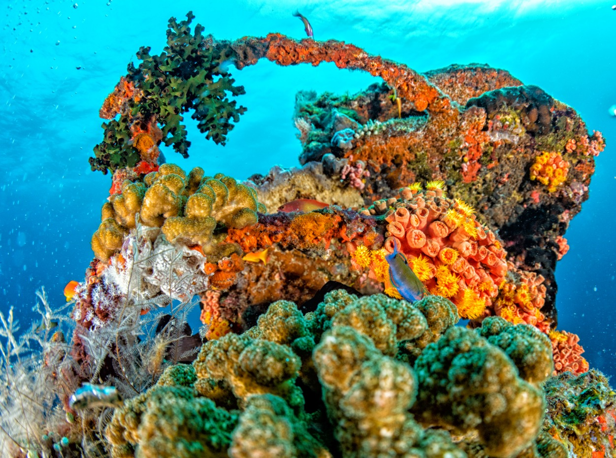The brightly coloured coral reefs of the Maldives