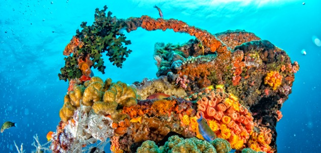 Brightly coloured cral reefs of the Indian Ocean, Maldives