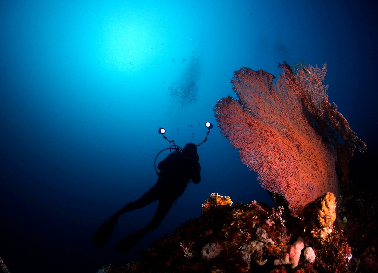 Scuba diver taking photos of huge coral fan in Indonesia