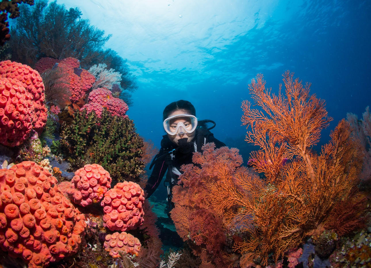 Scuba diver peering between hard and soft coral formations in Raja Ampat, Indonesia
