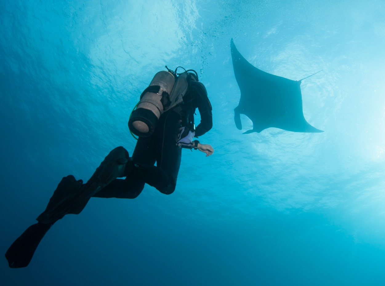 Diver in the Maldives with a manta ray silhouette