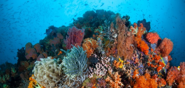 Hard and soft colourful corals at Indonesia dive site