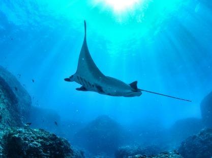 blue corner, reef sharks, image