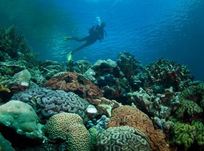 Chuyo Maru, Coral crustaceans, image,