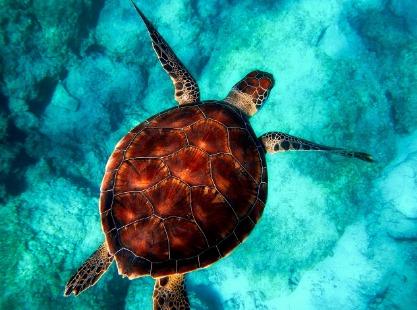 Turtle Cove, Ngemelis Island, Turtle, Image,