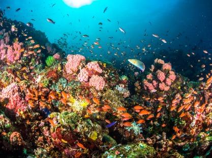 Dexter's Wall, soft corals, anemones,image,