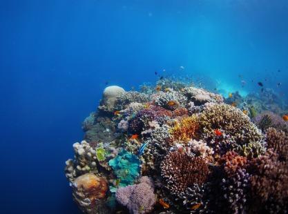 Peleliu Cut, reef, image,