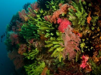 West Passage, Crinoids, Anemones, image