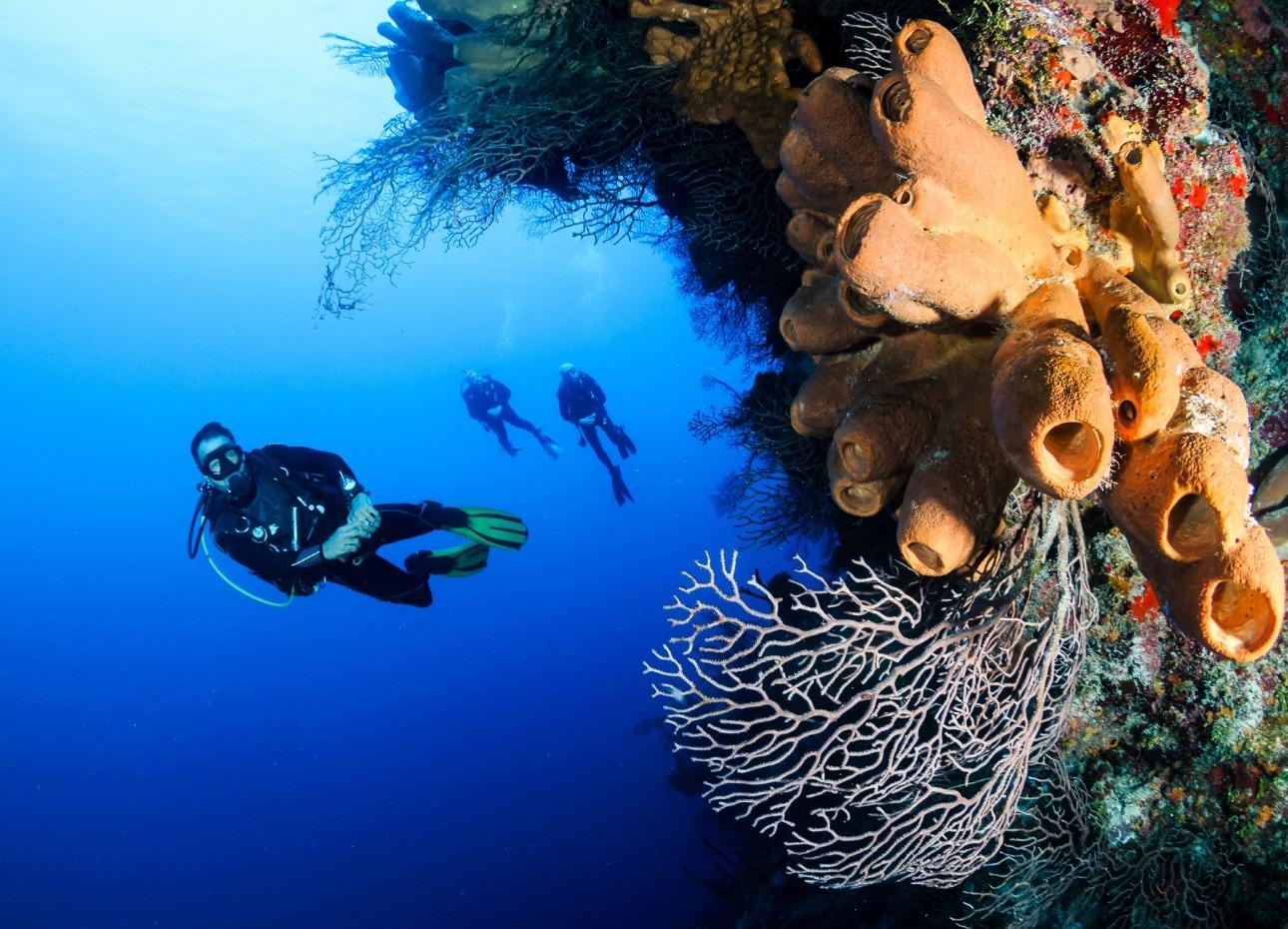 Palau Island, Divers, image,