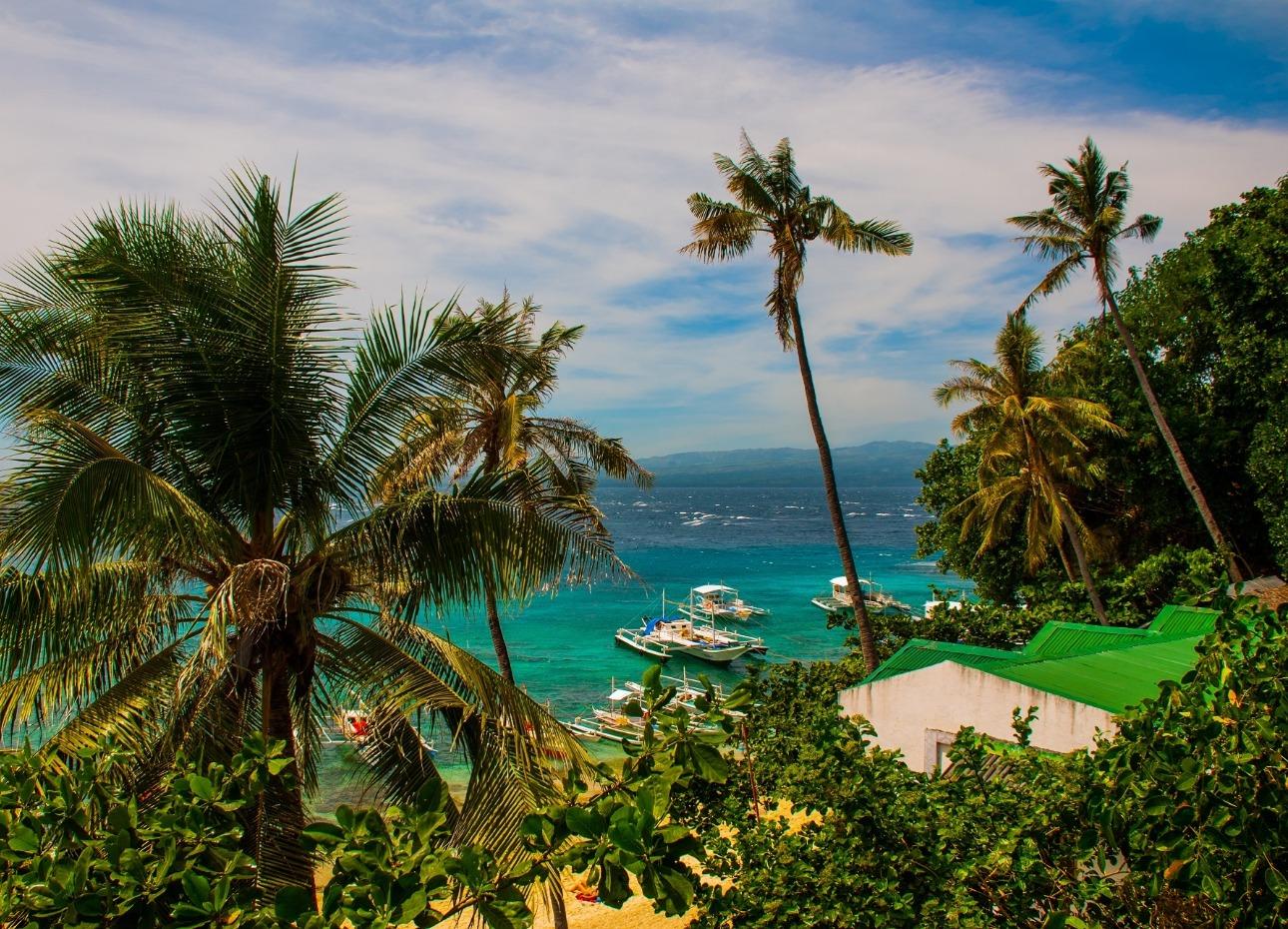 Philippines, Resort, Palm trees, image,