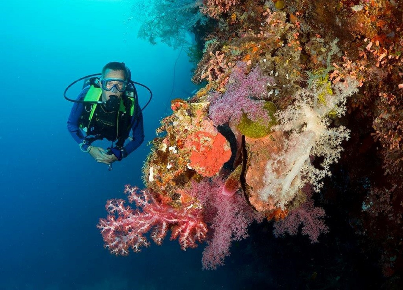 Philippines, Resort, Coral Diver, image,