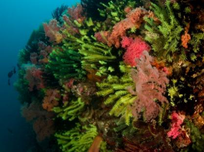 Philippines, Malapascua and Visaya, Corals, image,