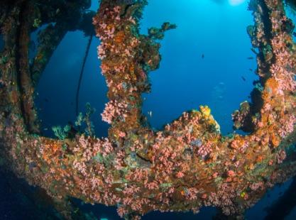 Philippines, Malapascua wrecks, image,
