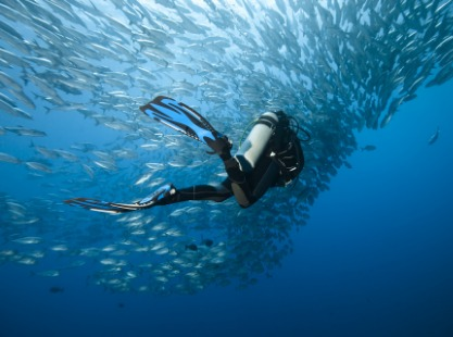 Philippines, Pescador, Diver and Shoal, image,
