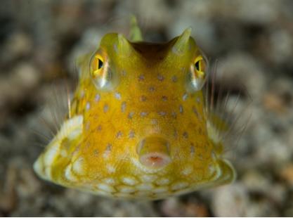 Philippines, Dauin Negros, Small fish, image,