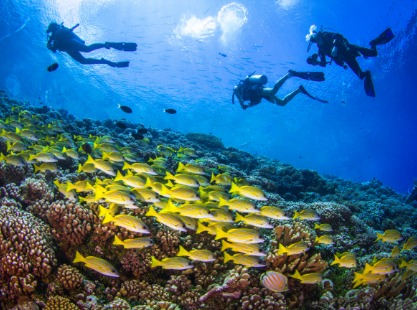 Apataki Island, French Polynesia