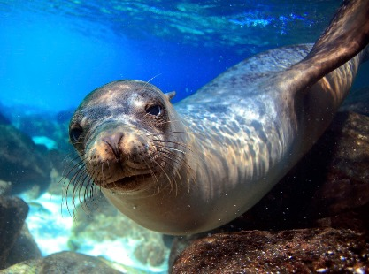 Philippines, Seafan Alley, North Atoll Seal, image,