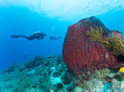 Philippines, Cogon Mamsa Point Apo Island, Crab, image,
