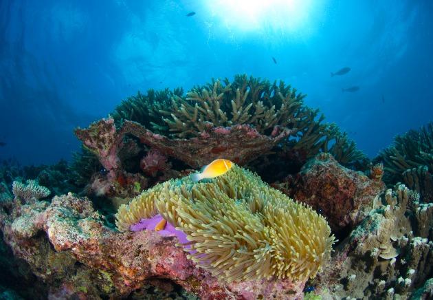 Bikini Atoll coral reefs