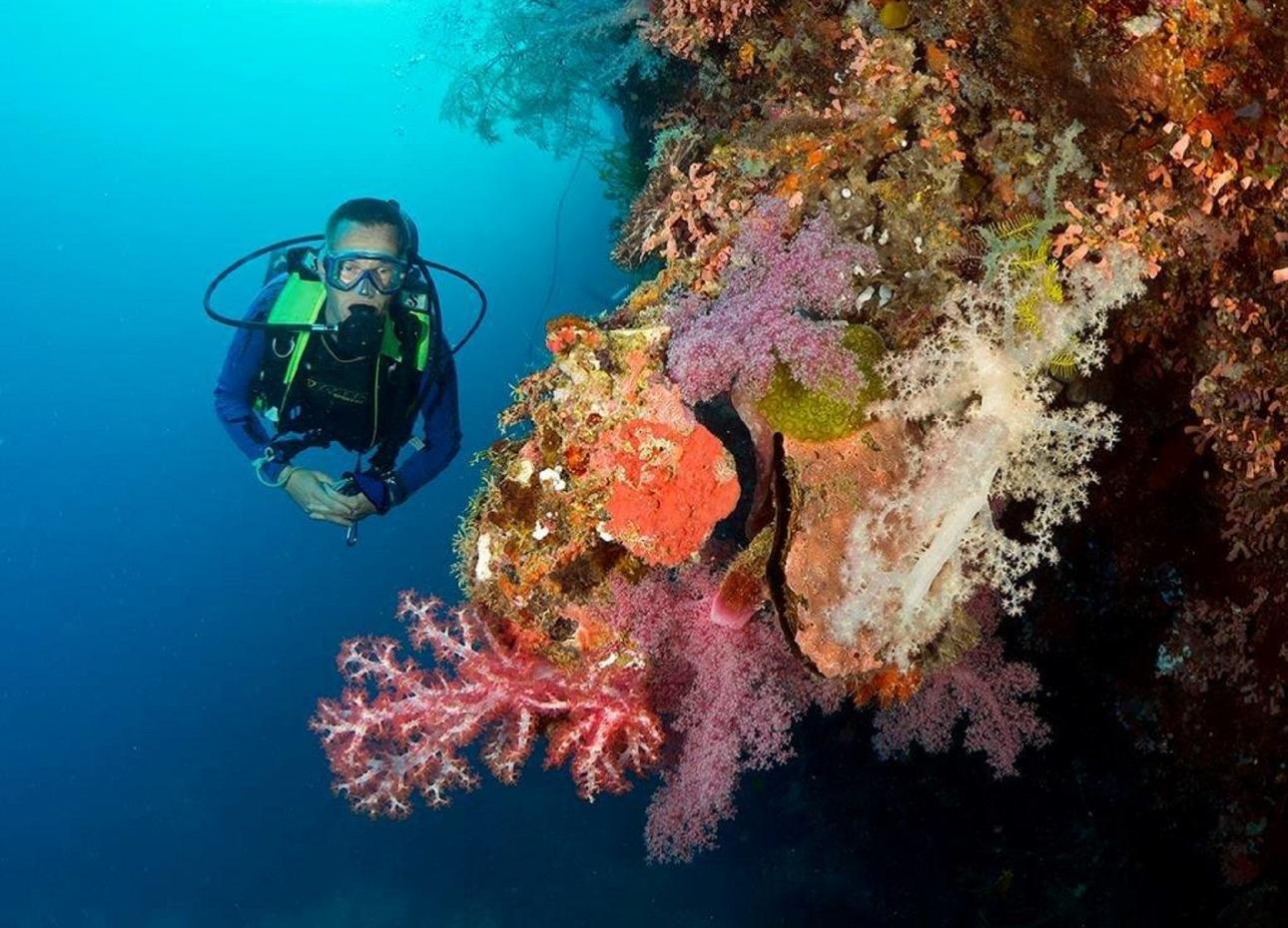 Philippines, Bohol, Magic Oceans Dive Resort, Coral Diver, image