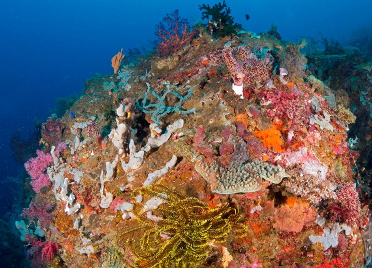 Philippines, Bohol, Magic Oceans Dive Resort, Coral, image