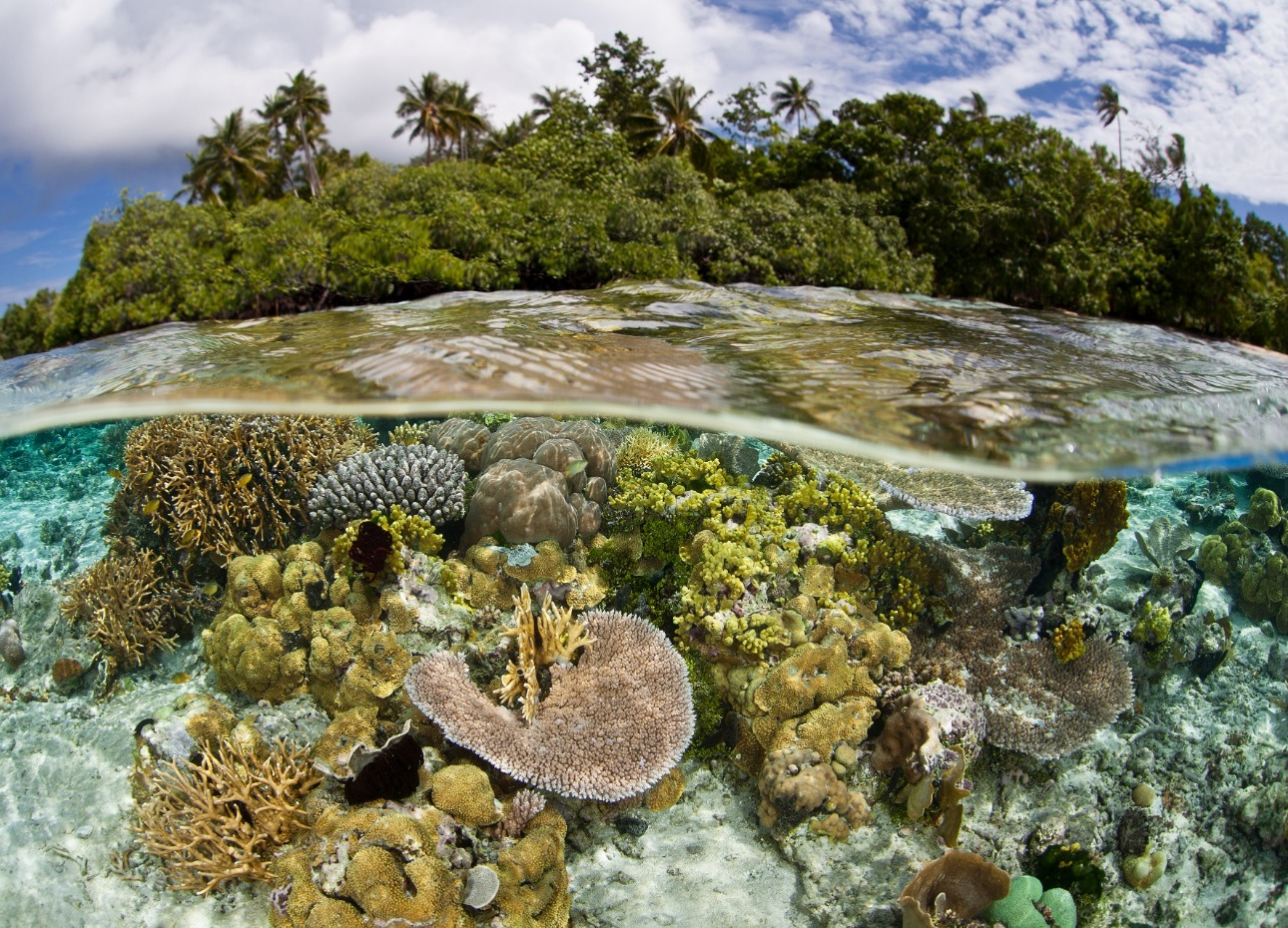 Solomon Islands, Underwater, Coral, image
