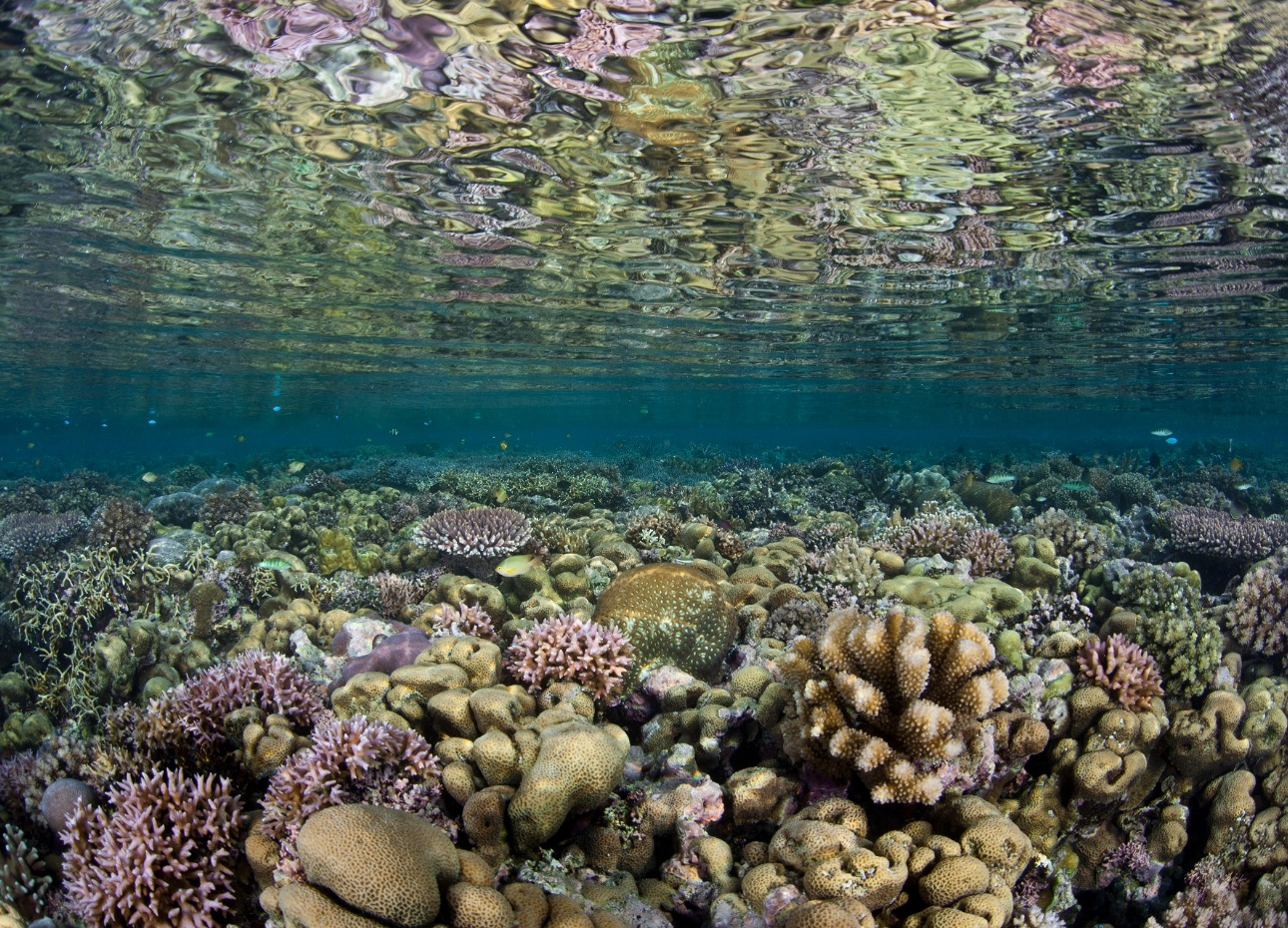 Solomon Islands, Coral Water Reflections, image