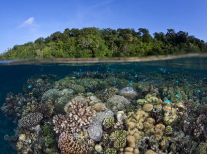 M/V Solomons PNG Master, Double Barrier Reef,  image