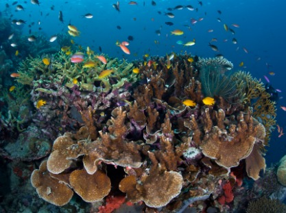 M/V Solomons PNG Master, Mbulo Island, Corals, image
