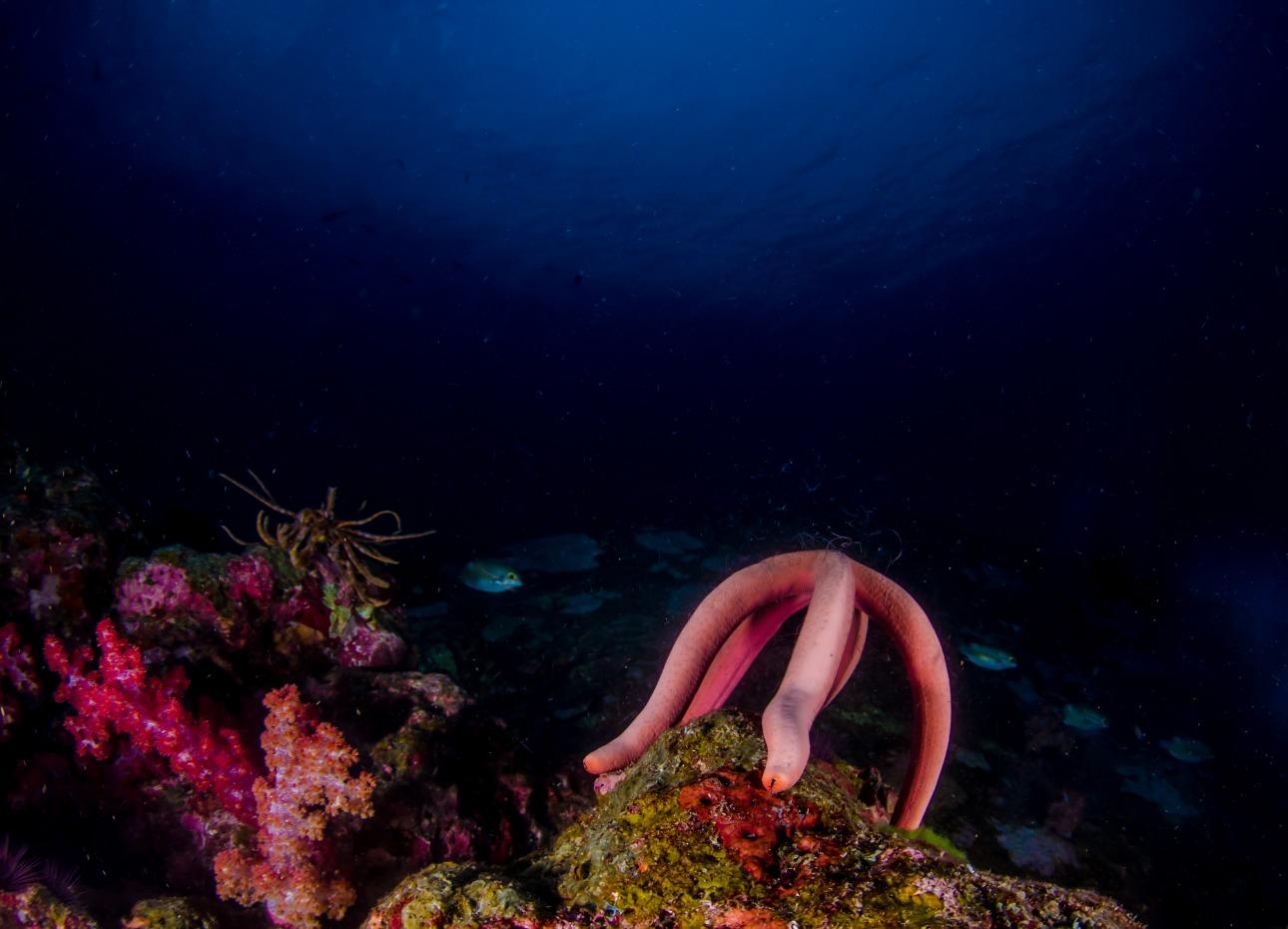 underwater Thailand scene