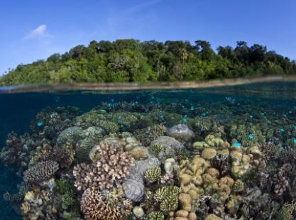 Solomon Islands, Coral, image