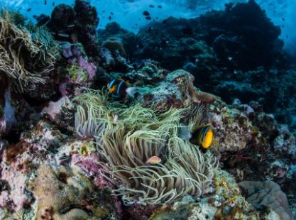 Solomon Islands, Coral, Byron Strait, image