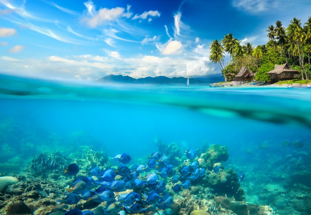 Philippines over and underwater split image