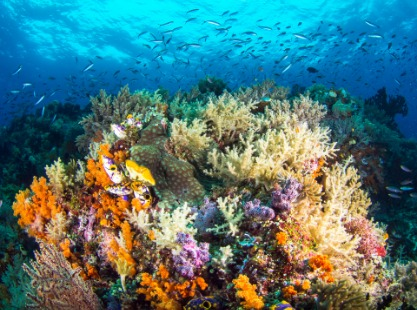 Solomon Islands, Gizo, image
