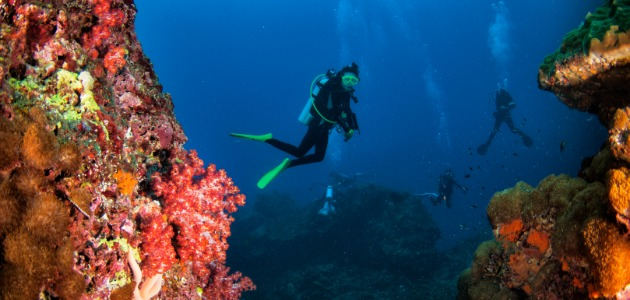 Divers exploring the brightly coloured coral reefs of Thailand
