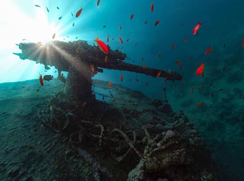 SS Thistlegorm wreck gun in Egypt, Red Sea