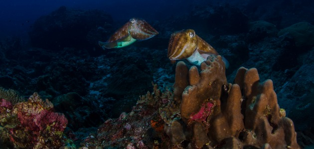 underwater scene, Thailand
