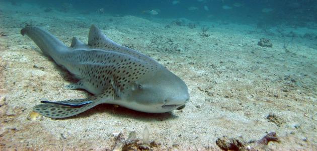 Shark in Thailand