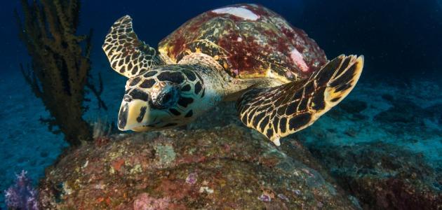 Turtle in Thailand
