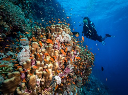 Diver exploring Fury Shoal, Red Sea