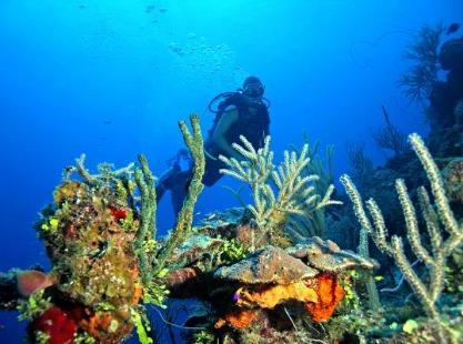 Diver and coral Bahamas