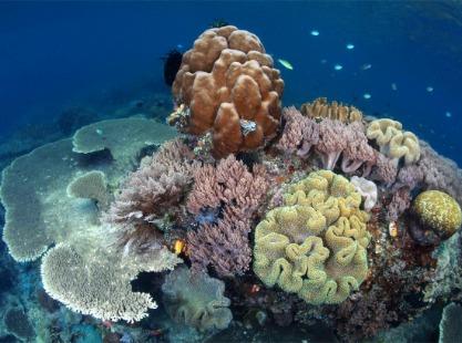 Raja Ampat, corals