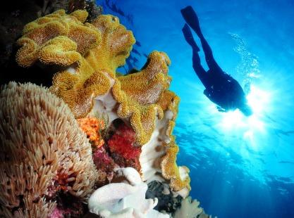 Colourful corals